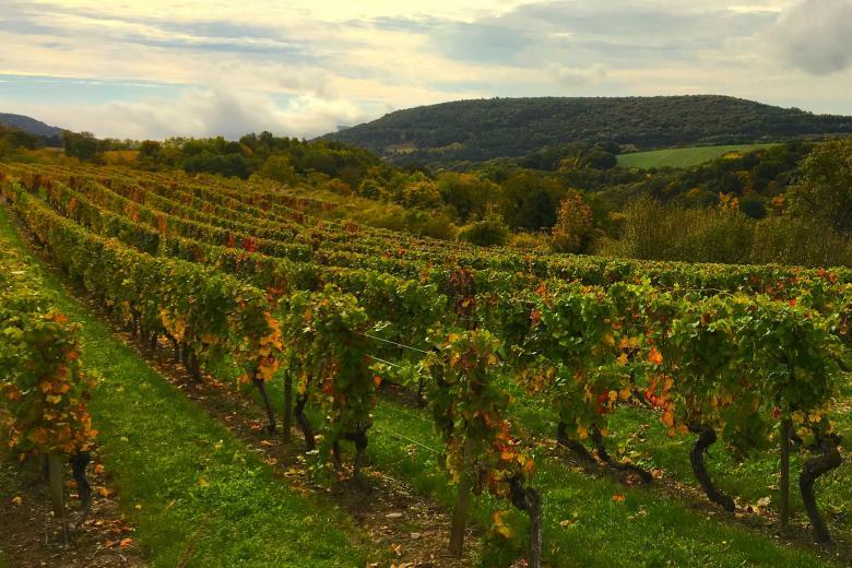École Suisse de Dijon - Vignes